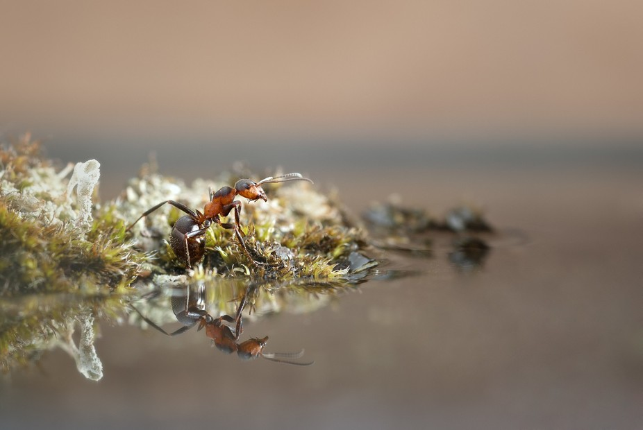 """This picture gave me the name """"Reflective"""" when the ant is reflected in the water and t..."""