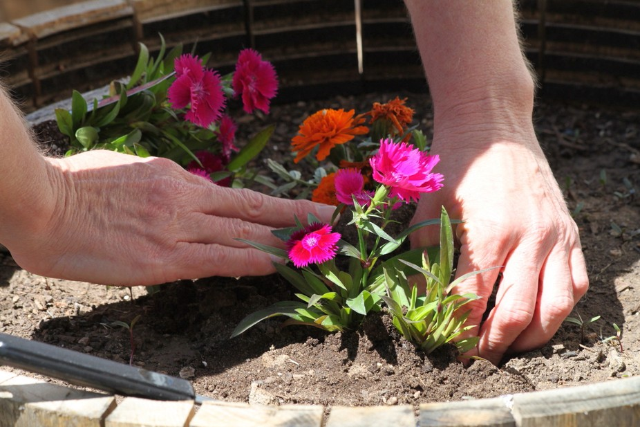 My daughter, helping hands this spring flowers. Last second I wanted a pictures to capture some o...