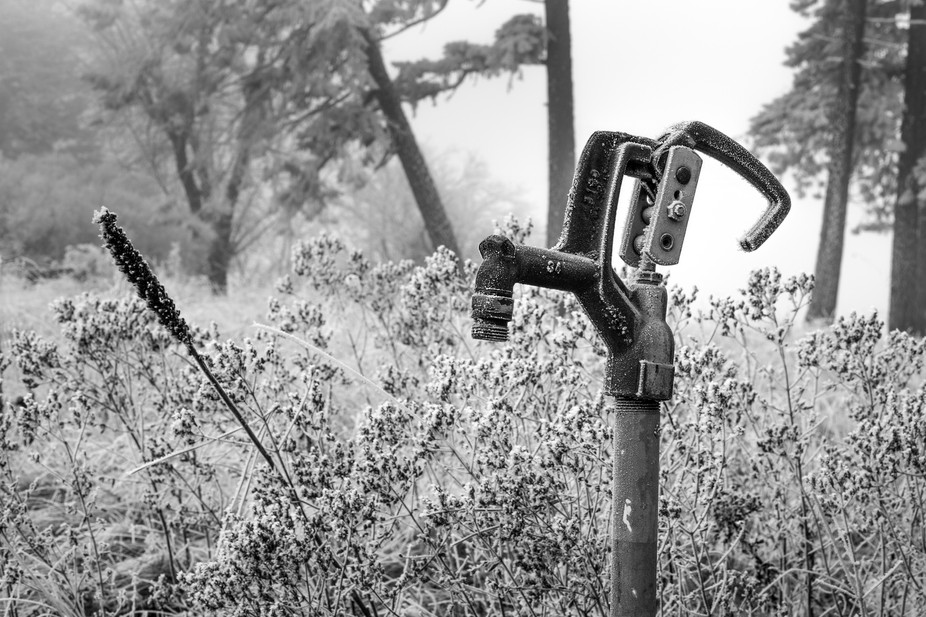 Just what it says, a Spigot in the Woods.