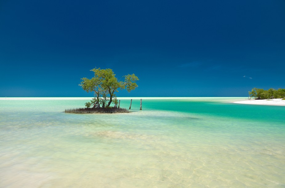 A lonely mangrove tree on a small solitary island in a stunning emerald sea, on a sand bank in Is...