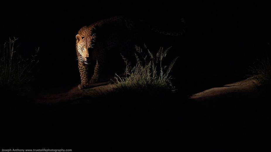 Multi awarded winning image in 2014 and 2015. Grand prize in the Art Wolfe Compelling image Conte...