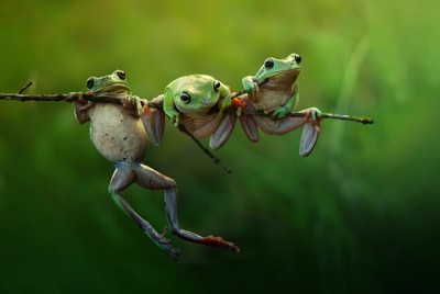 fairy frog story