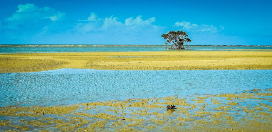 A lonely mangrove on the beach near Cape Tribulation, Far North Queensland, Australia.