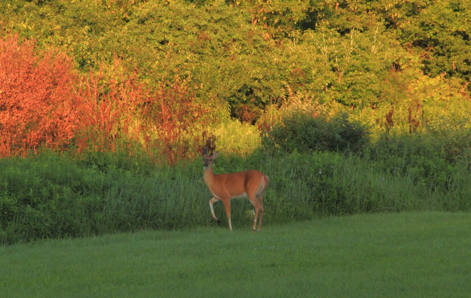 On the way home from an early morning shoot I saw this one standing next to the road in a smaller...