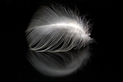 Seagull Feather And Reflection
