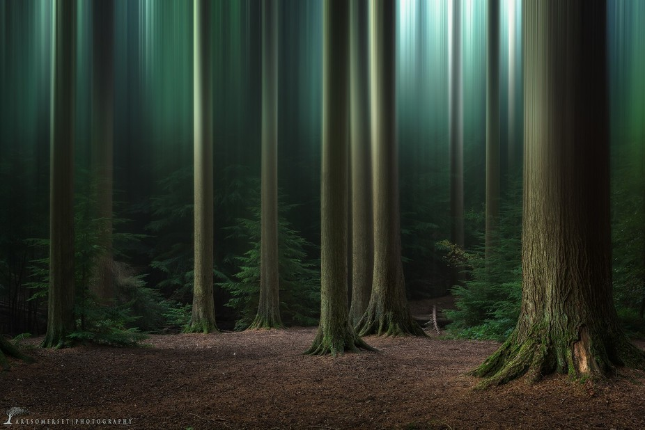 Blurry Forest