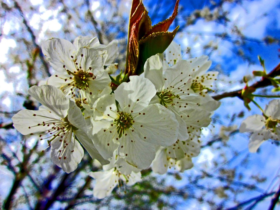 Blossoms on a tree.