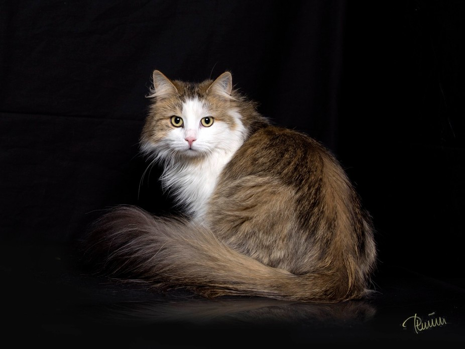 My cat Perle just dumping in to the studie for test shoot ;-)