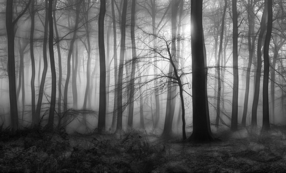 B&W version of Forest Dawn - Forest Sunlight in winter woodlands