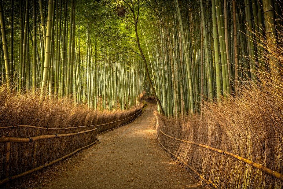 Bamboo Forest in Kyoto