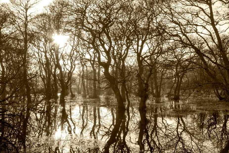 Taken on a misty afternoon after the flooding of Kinnaber woods, there was no wind and it was so ...