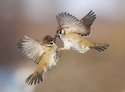 a kiss in flight