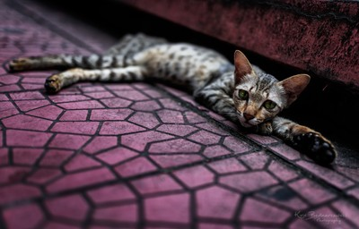 a cat chilling