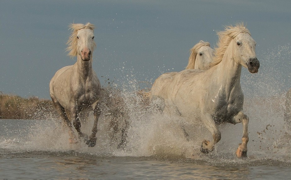 Galloping through the water