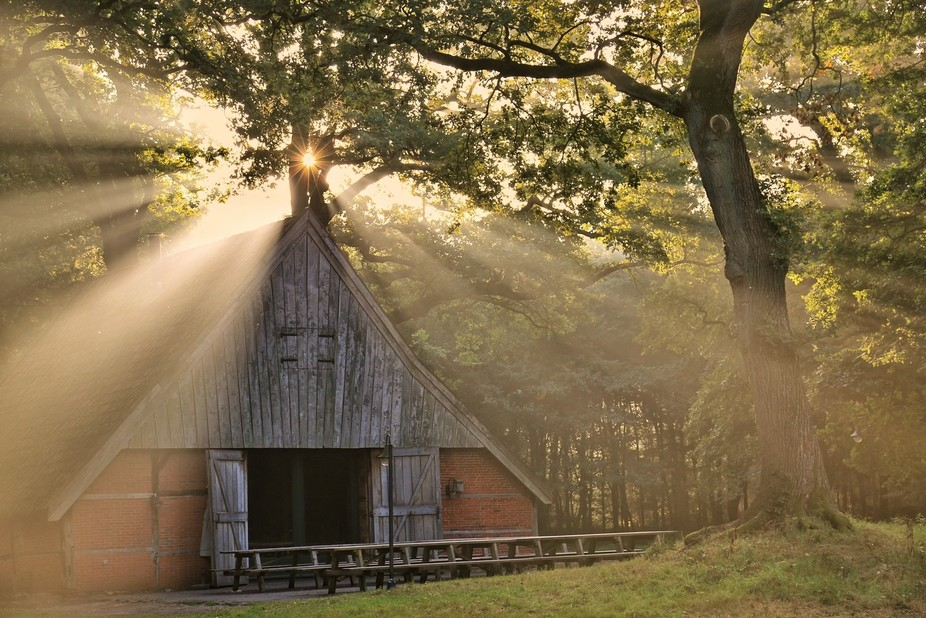 Sun beams piercing through the tree branches right above an old farm located in the eastern part ...