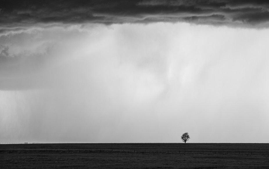 A little tree stands on a hill as a severe thunderstorm happens around it. I wonder what this lit...
