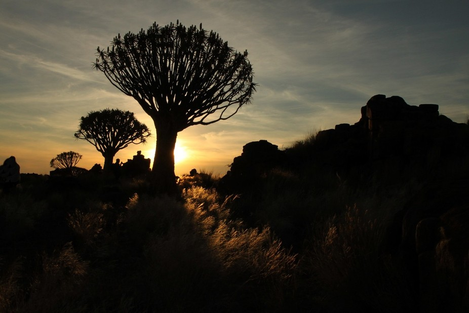 I just loved the look of this Quiver Tree. I took photos early in the mornings and sunset.