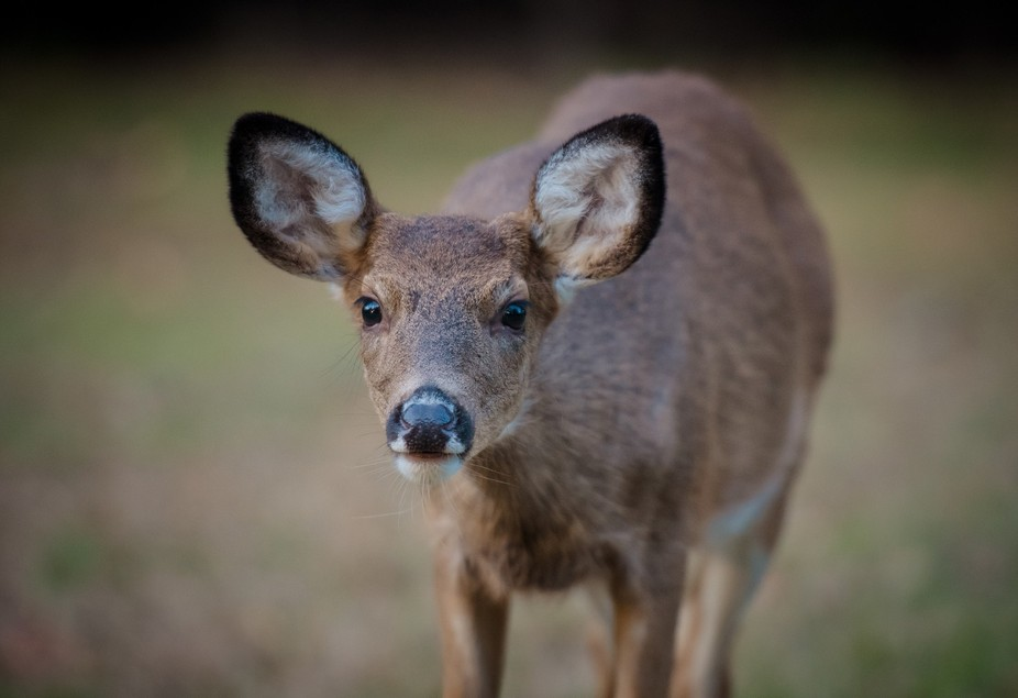 This little fawn was incredibly curious about me and my camera. He, very calmly, walked right ove...