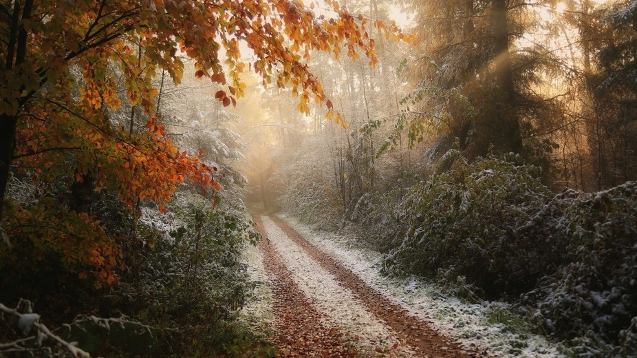 Shot in early November on one of the okd 'church paths' in De Lutte, located in...