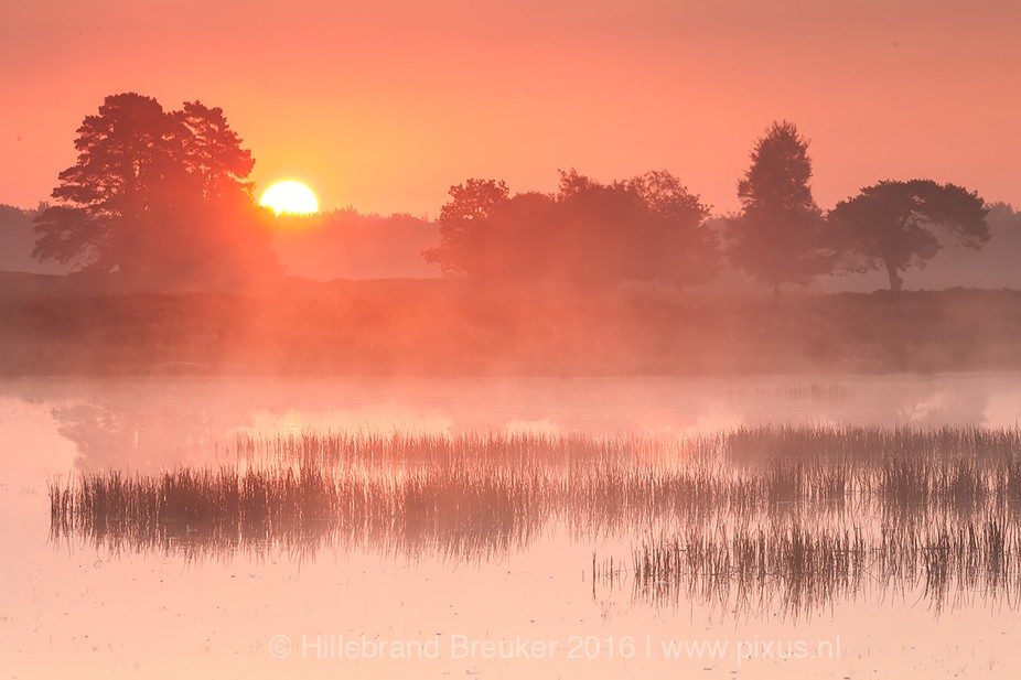 A mystical sunrise at my local pond. I love these cold september mornings!