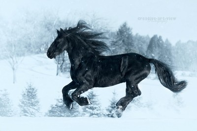 Black Power in the snow