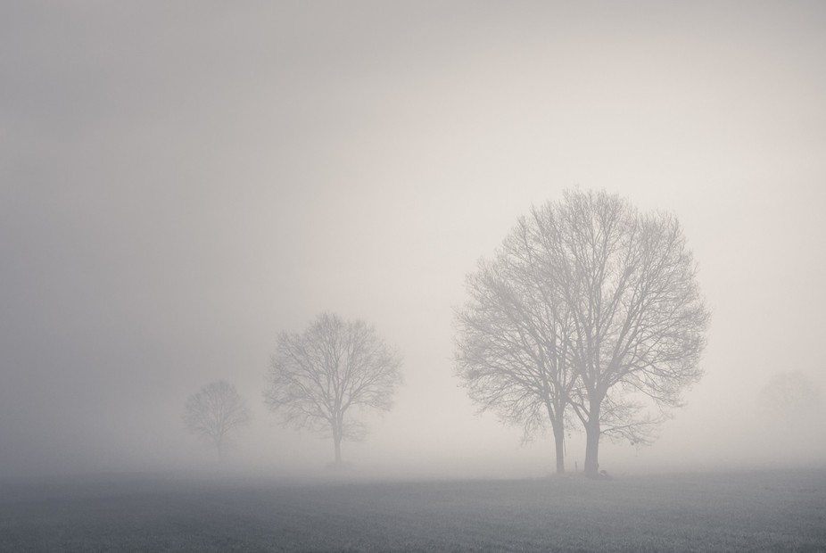 A composition of three trees standing on a very misty meadow in the Netherlands.
