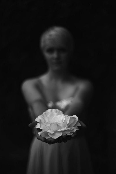 white rose of peace