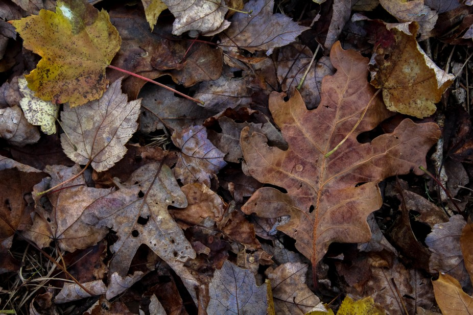 Pile of leaves on the ground in Autumn