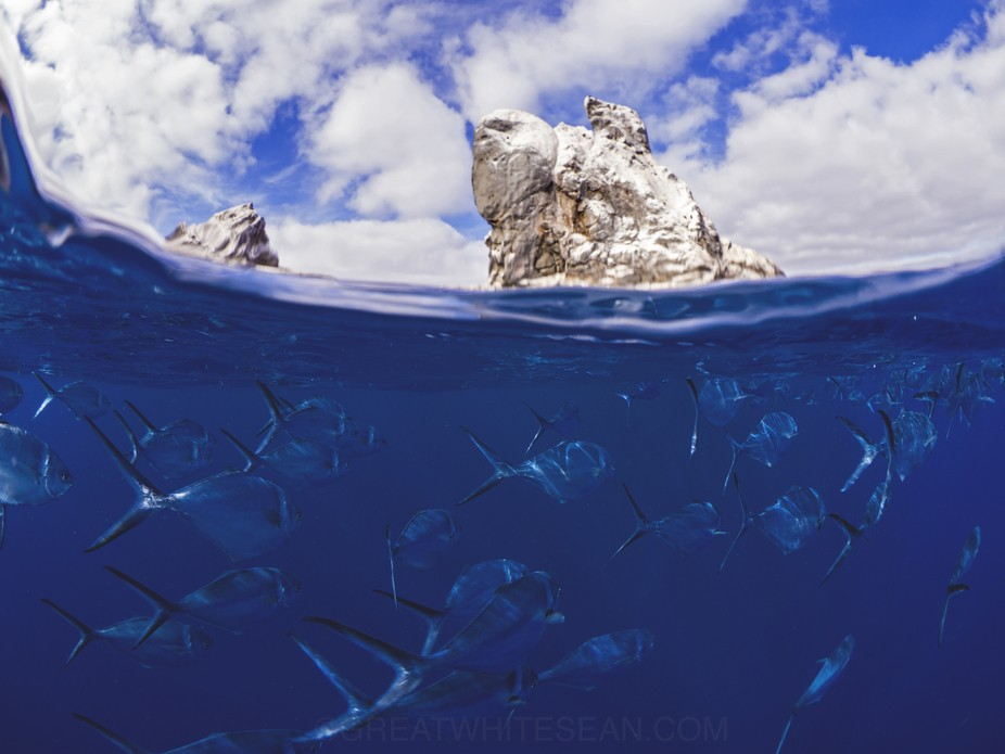 After surfacing from a dive at Roca Partida we had these fish all around us. So I decided to try ...