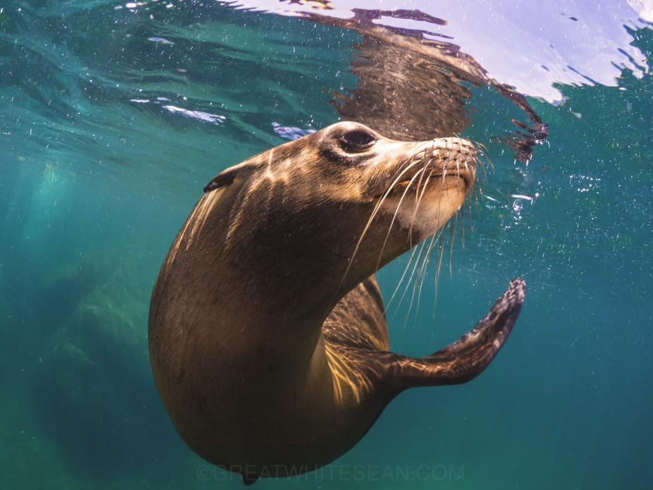 Quite the pose from this friendly sea lion in La Paz. :)
