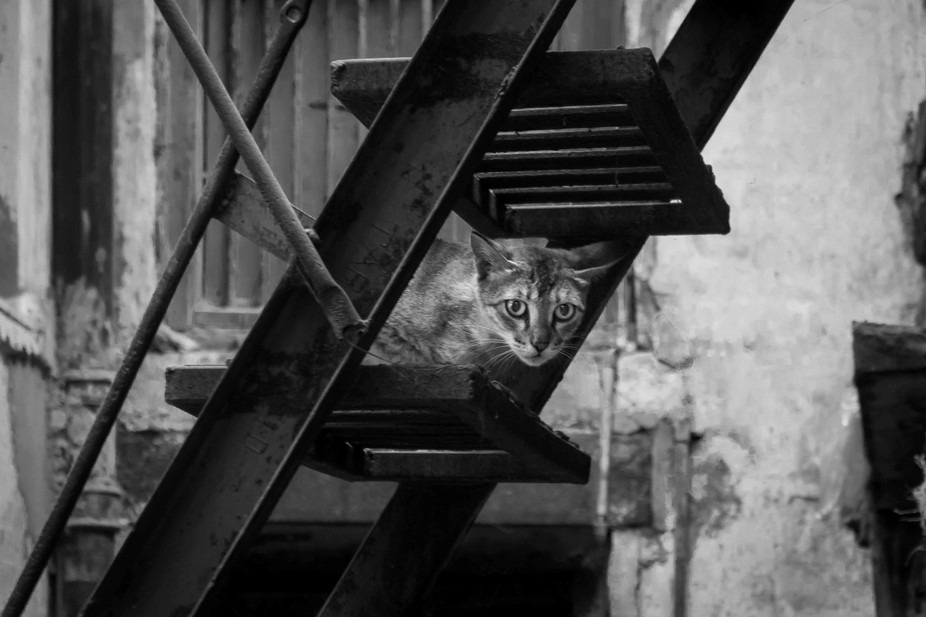 during the photoshoot in the streets of Varanasi...saw this cat hiding under the staircase ...