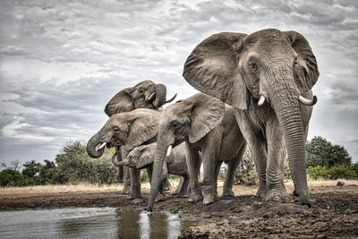 A day in the life of an Elephant