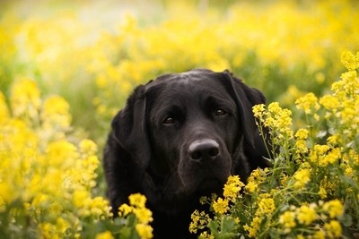 Mason in the flowers