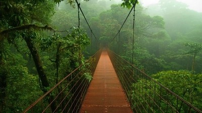 Photography of jungle trees and bamboo bridge