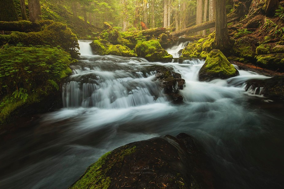 A beautiful creek cascading around mossy boulders and through the Gifford Pinchot National Forest...