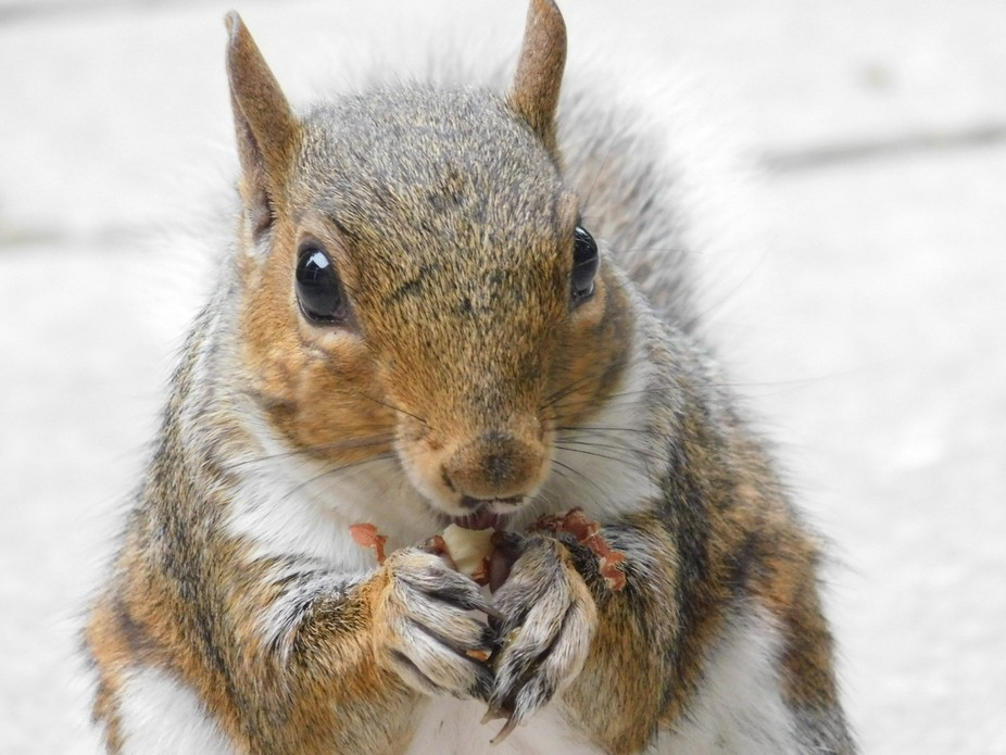 This guy munching on a nut almost posing for a photo!! Well I couldn't say no..