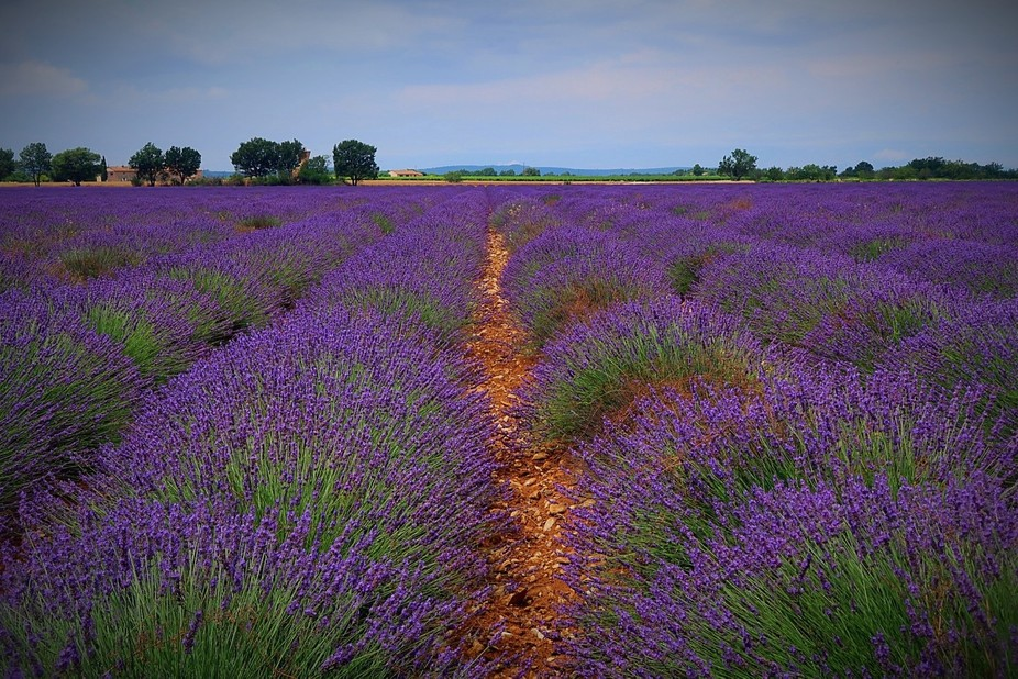 I always wanted to take an image of a lavender field. This one is located near to Esparron-du-Ver...