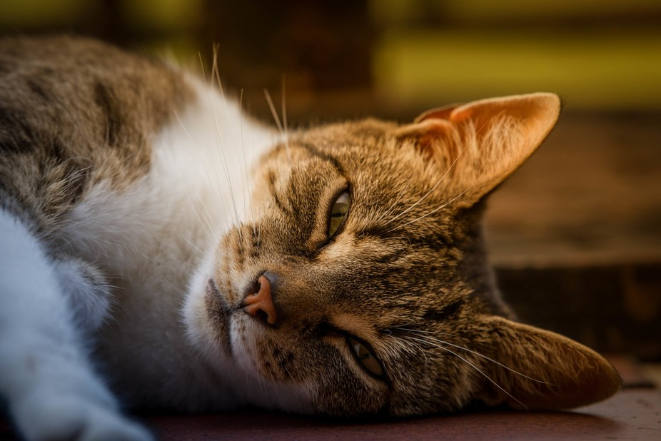 A cat's life... do as you please!