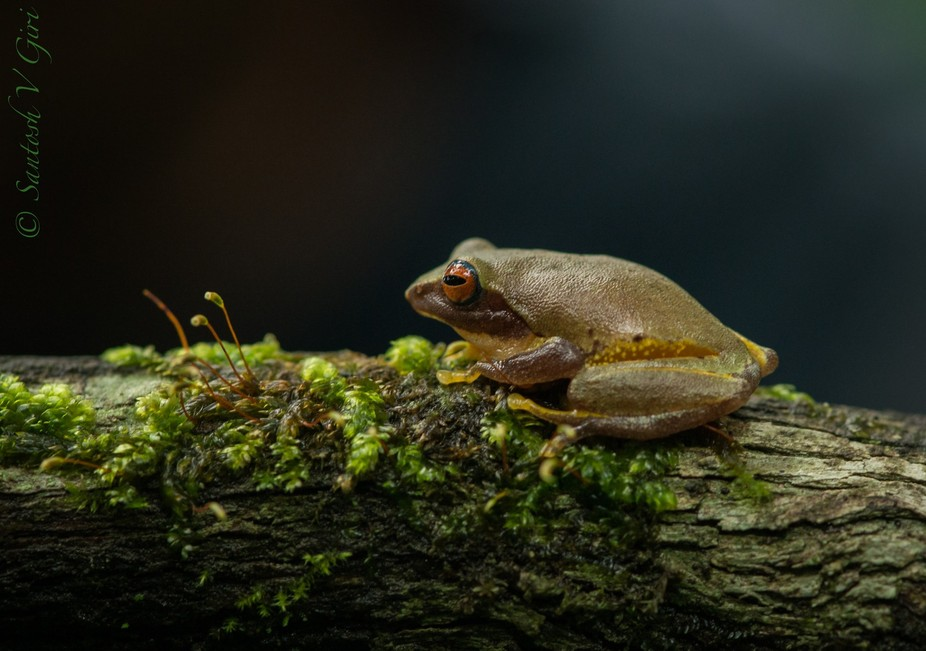Endemic of Western Ghats, India