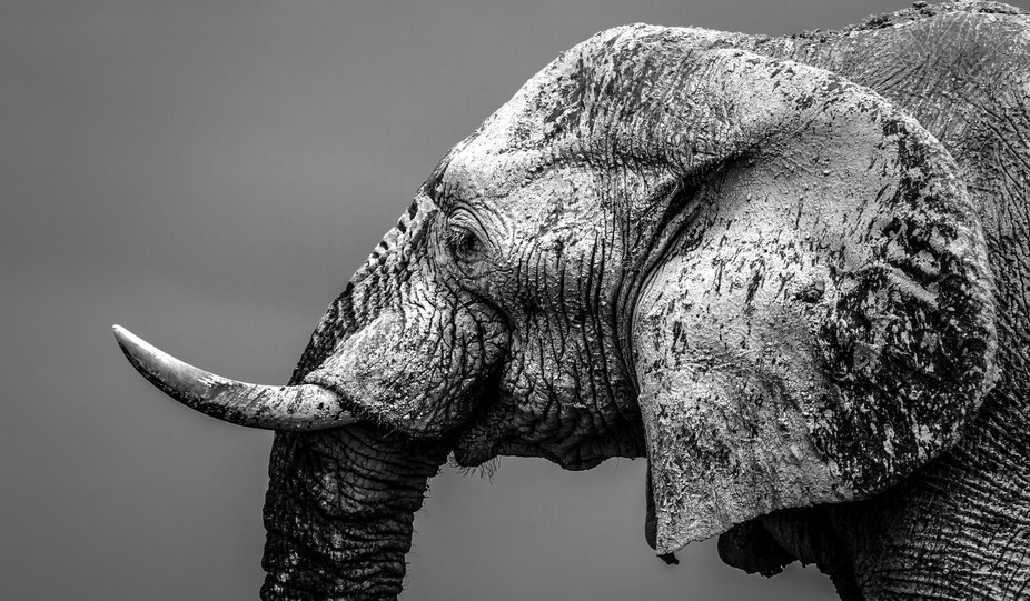 While in Etosaha Namibia I saw some amazing elephants. Because it was well over 40 degrees celsiu...