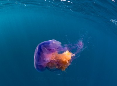 Jelly in Colour