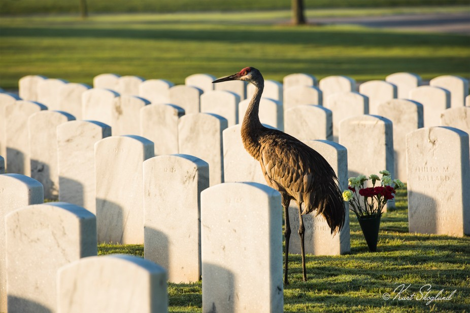 The Sarasota National Cemetery is located off i-75 west of Sarasota, Florida.