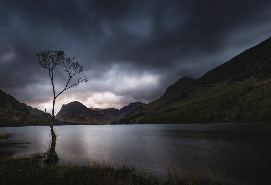 The famous lone tree at Buttermere in the Lake District, UK.