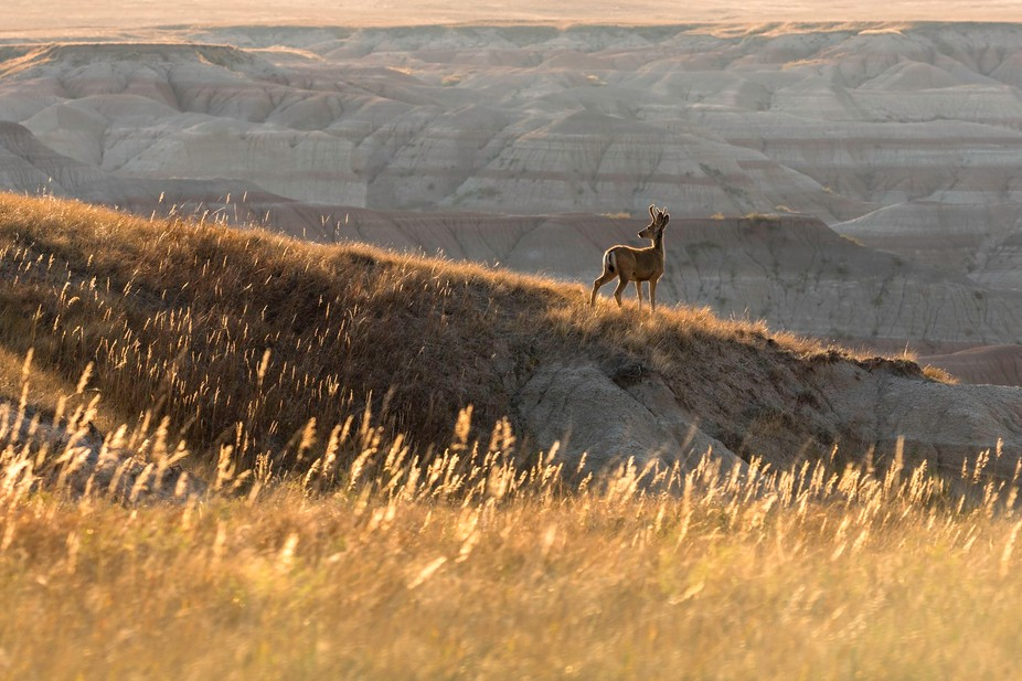i just finished taking a wide angle panorama at badlands national park when i was about to pack u...