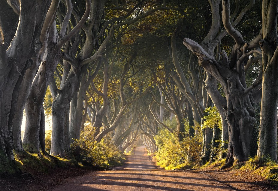 The Dark Hedges in Northern Ireland, more recently famous as Kings road in the Game of Thrones Te...