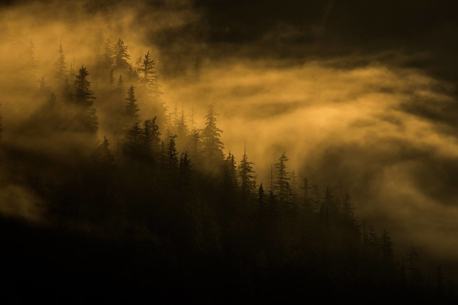 I made this photograph early one morning in the wilderness of southeast Alaska. The sun has just ...