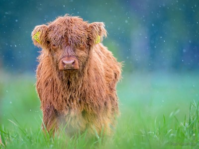 Youngster in rain