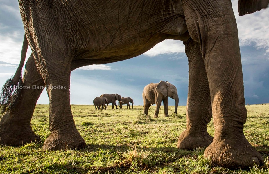 A baby elephant's view of the world. Taken hand held.