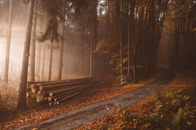 Lonely logs in the orange autumn woods