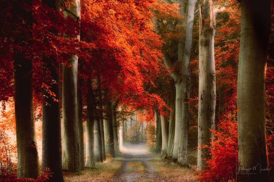 The red path